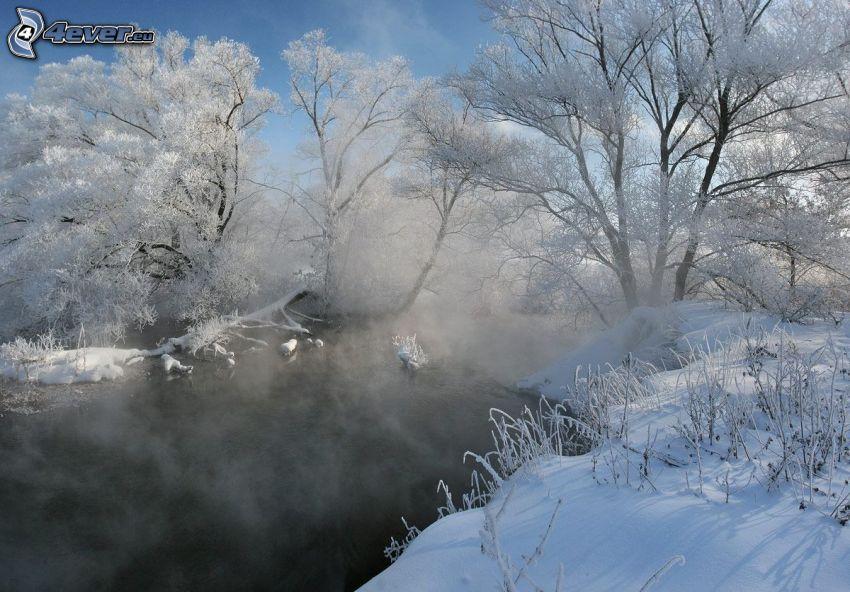 snowy trees, stream