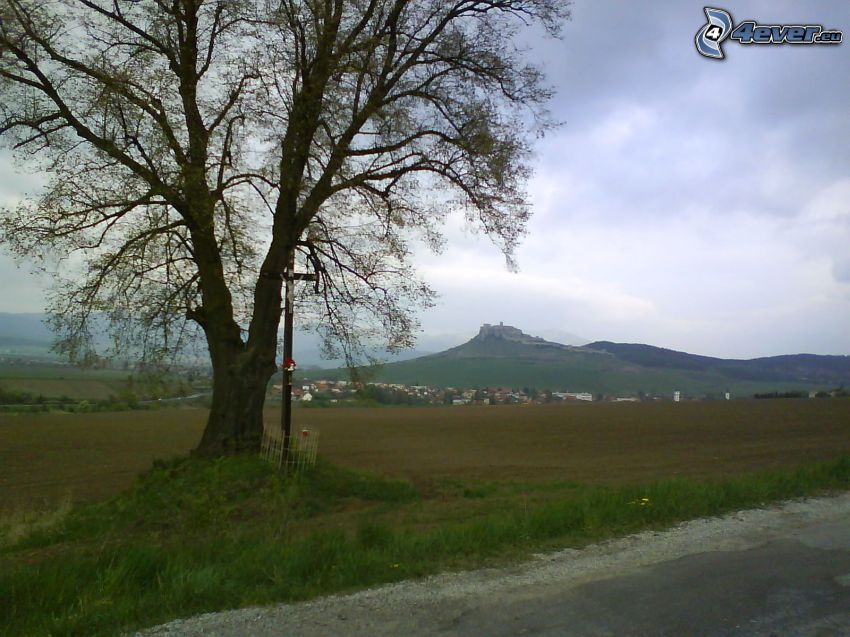 Spiš castle, tree by road, cross, lonely tree, village