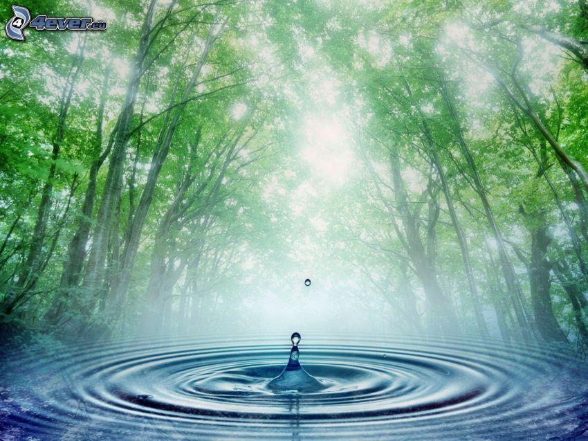 splash, green trees, water