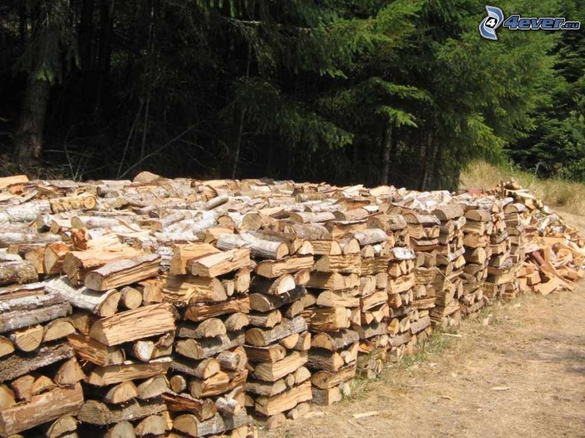 stacked wood, forest