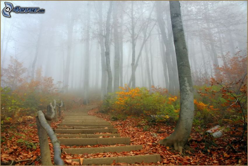 stairs, trail through the forest, fog, fallen leaves