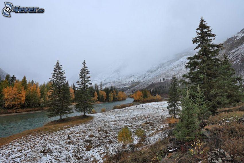 stream, coniferous trees, snow, yellow trees