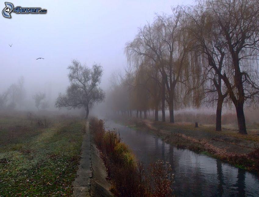 stream, fog