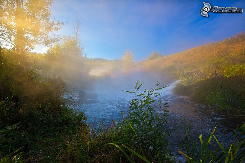 stream, greenery, sunbeams