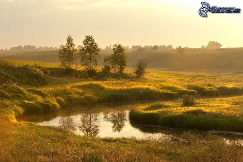 stream, greenery, trees
