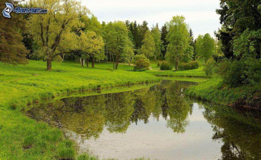 stream, greenery