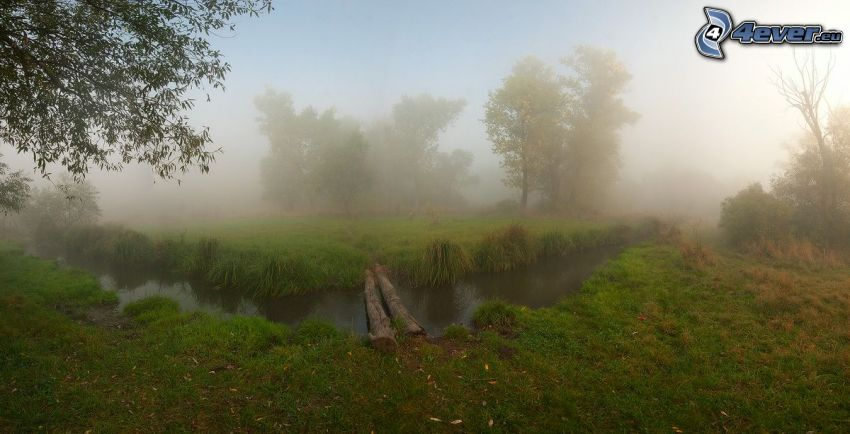 stream, logs, wooden bridge, ground fog