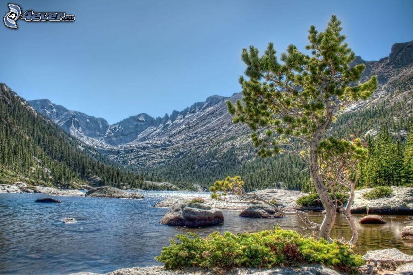 stream, pine, hills, HDR