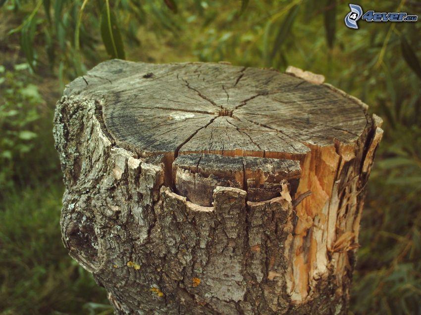 stump, branch