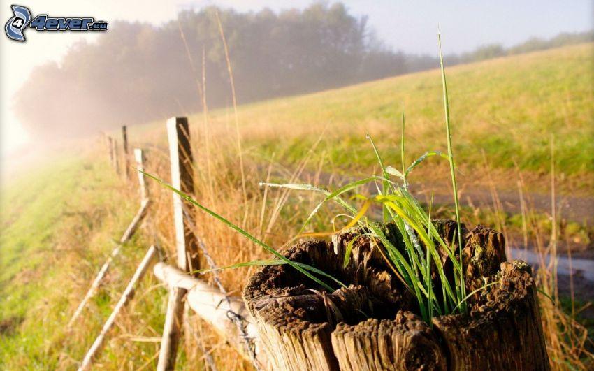 stump, grass, palings