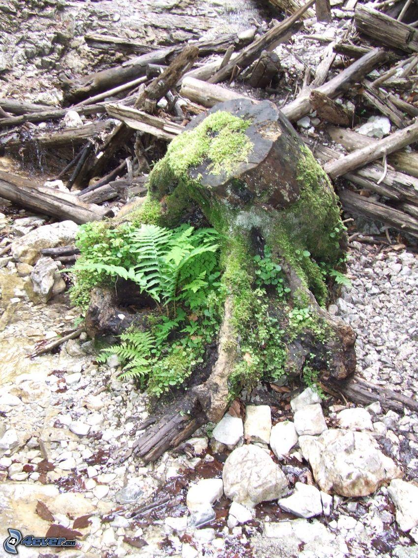 stump, moss, wood
