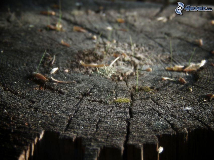 stump, wood