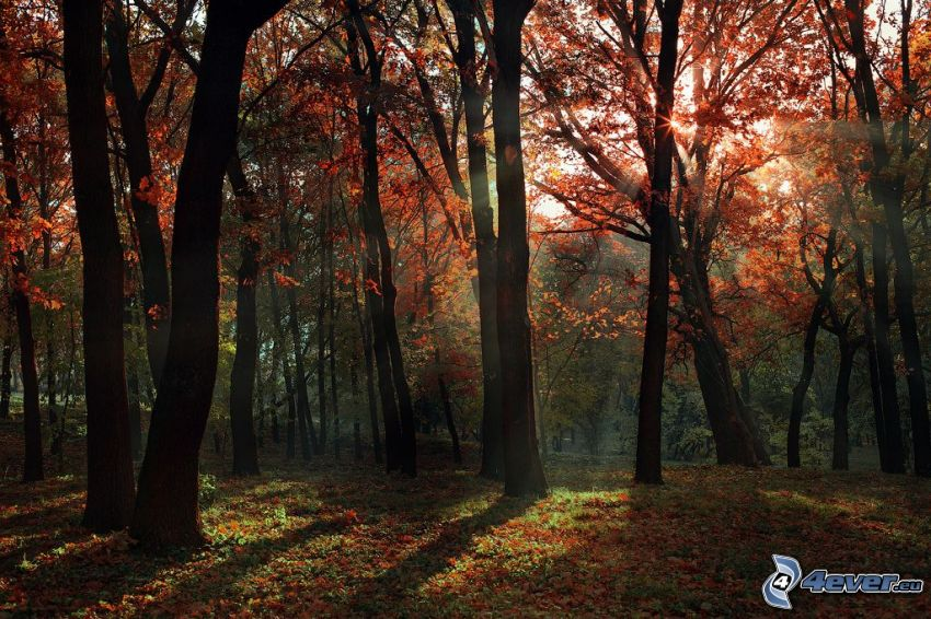 sunbeams in forest, autumn trees