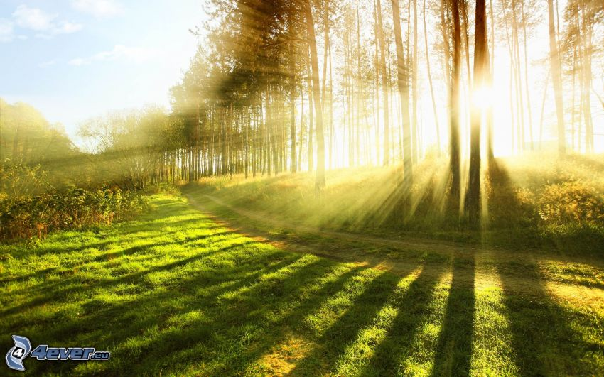 sunbeams in forest, field path, meadow