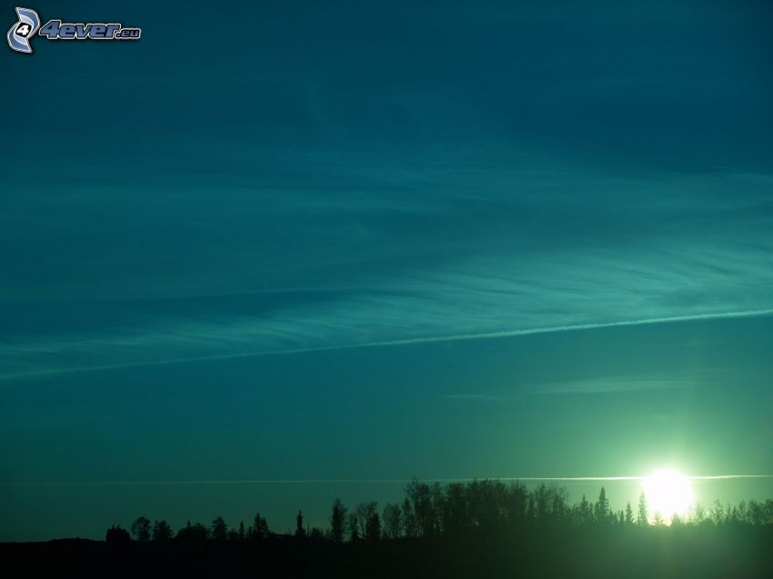 sunset in the forest, contrail, evening sky