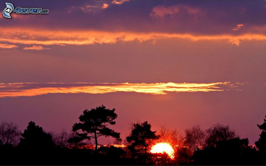 sunset in the forest, evening sky, silhouettes of the trees