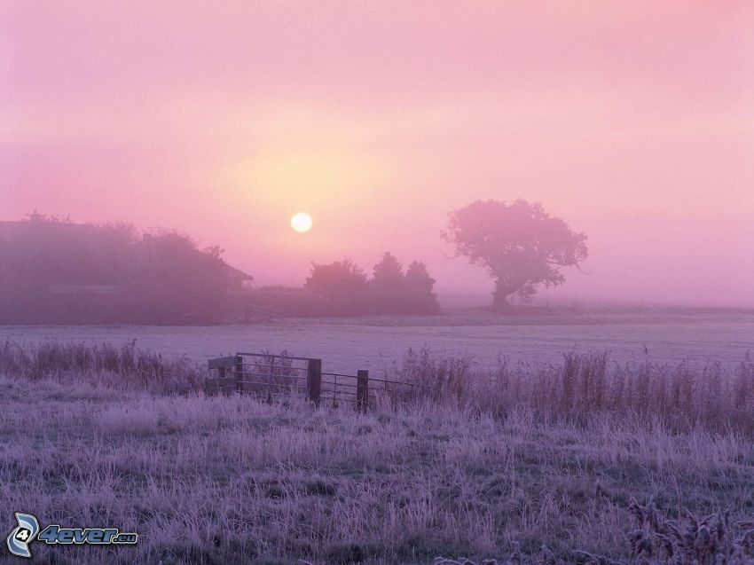 sunset in the meadow, trees, purple sky, fence