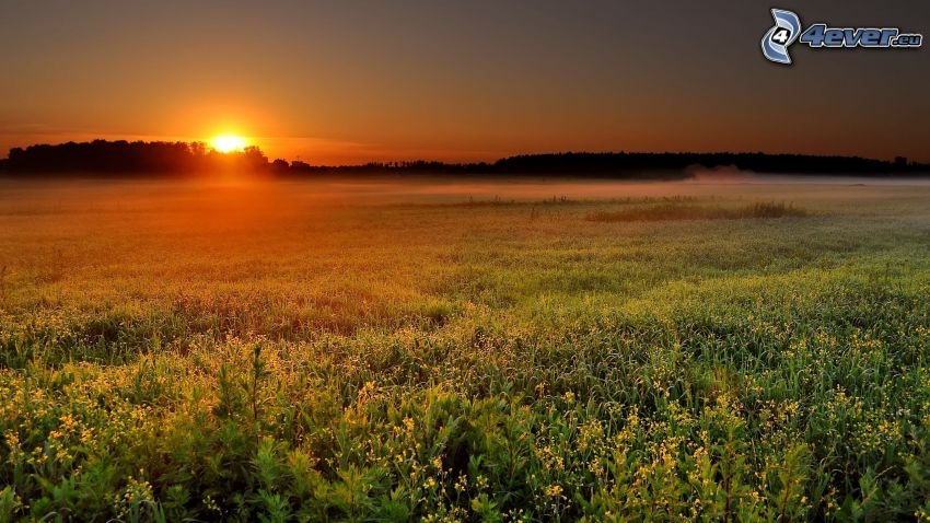 sunset in the meadow