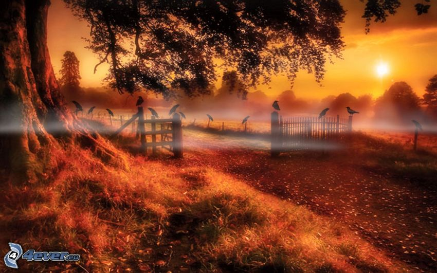 sunset over the forest, fence, birds, ground fog, field path