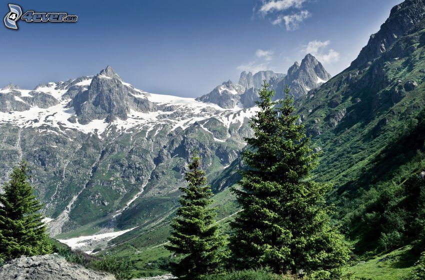 Switzerland, rocky mountains, trees