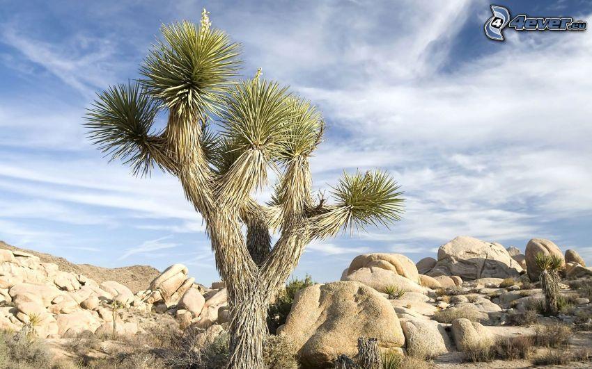 tree, rocks