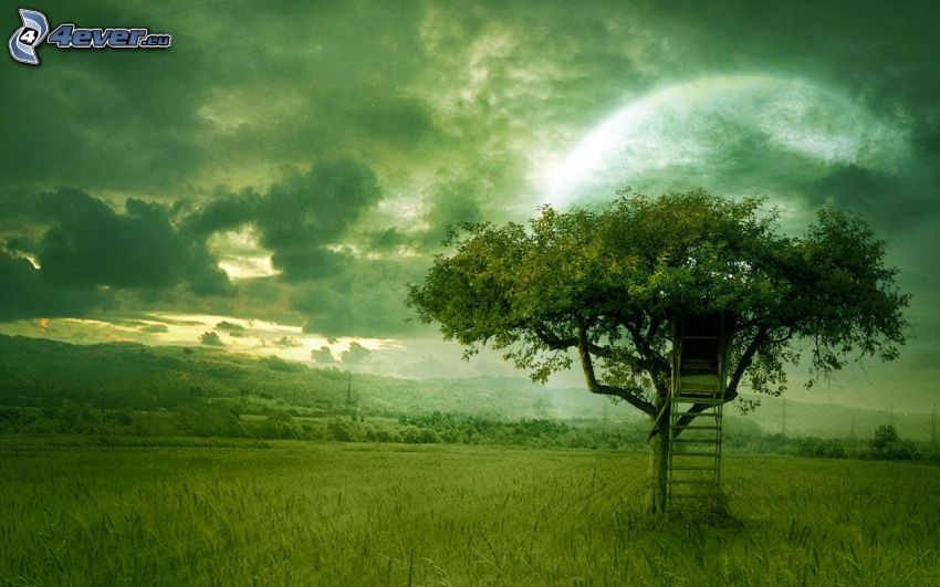 tree, tree stand, meadow, clouds