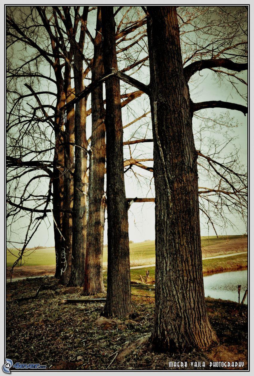 tree line, meadow, defoliate tree, logs