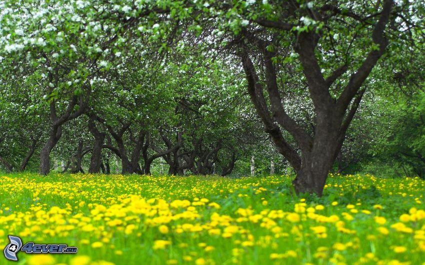 trees, dandelion
