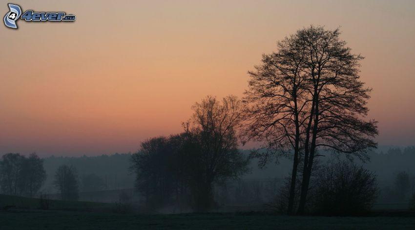 trees, evening sky