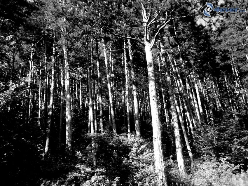 trees, forest, logs