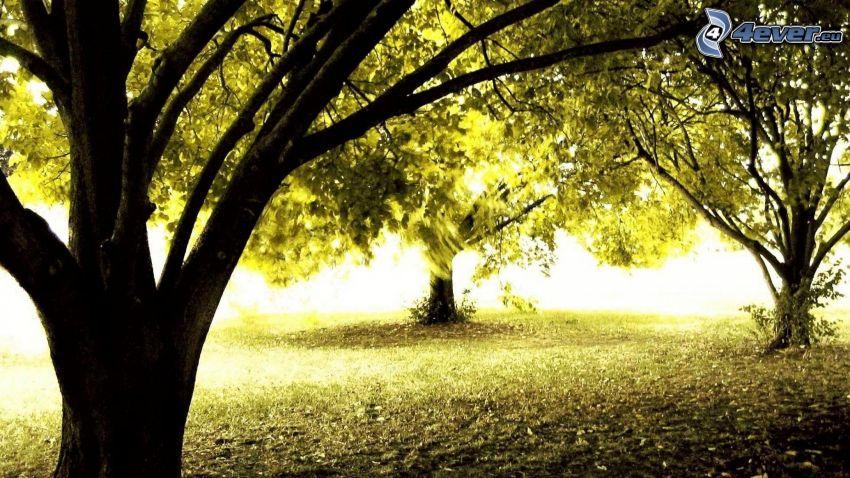 trees, greenery