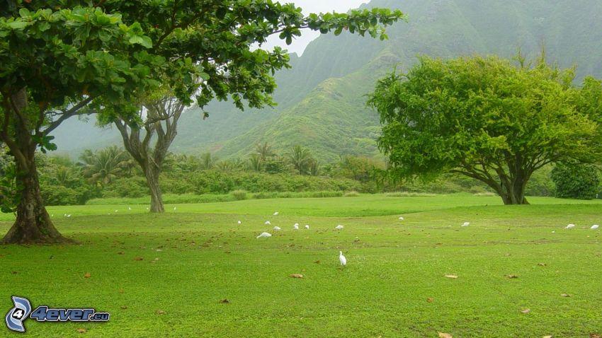 trees, hill, lawn