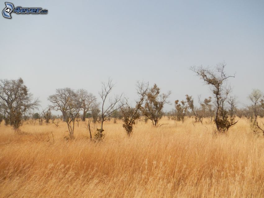 trees, meadow