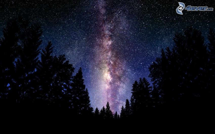 night sky, starry sky, silhouette of a forest, Milky Way