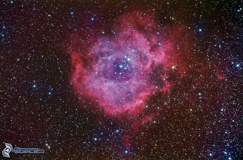 Rosette nebula, stars