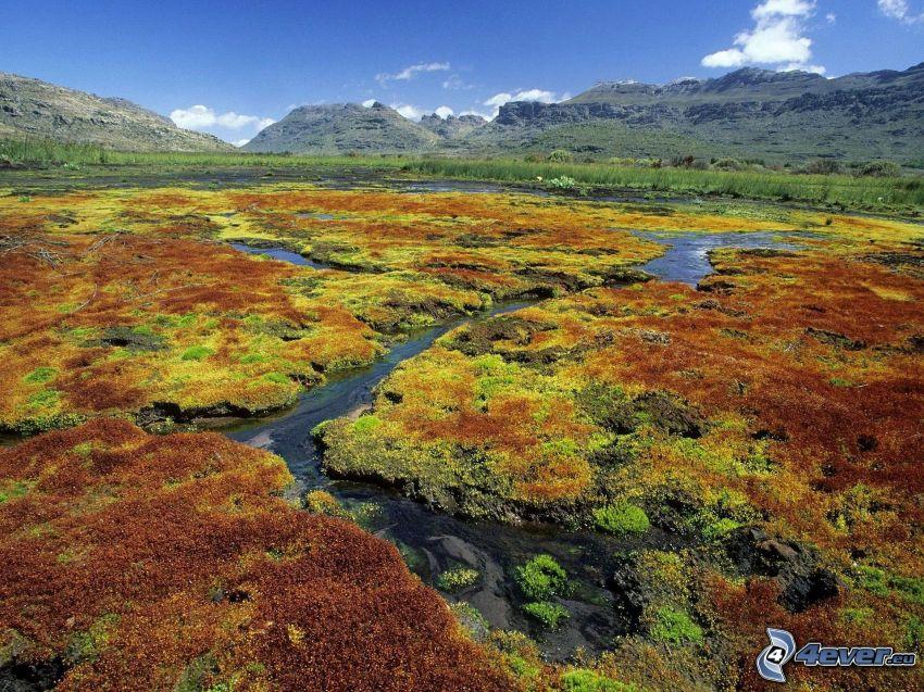 valley, water, stream, hills