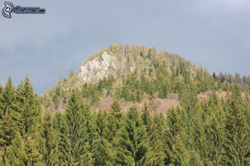 Veľká stožka, hill, rock, coniferous forest