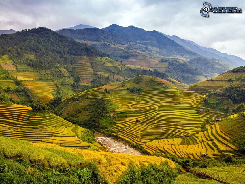 vietnamese rice fields, mountain