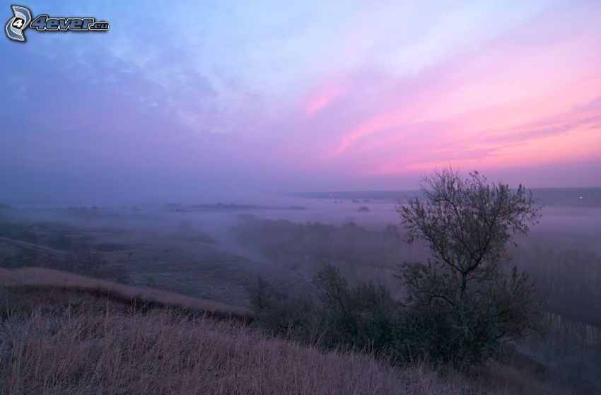 view of the landscape, after sunset, dry grass, pink sky