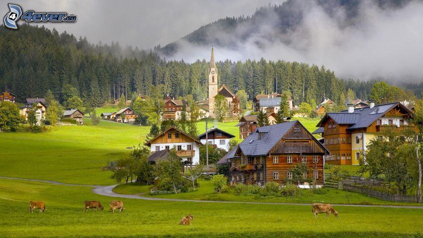 village, cow, coniferous forest
