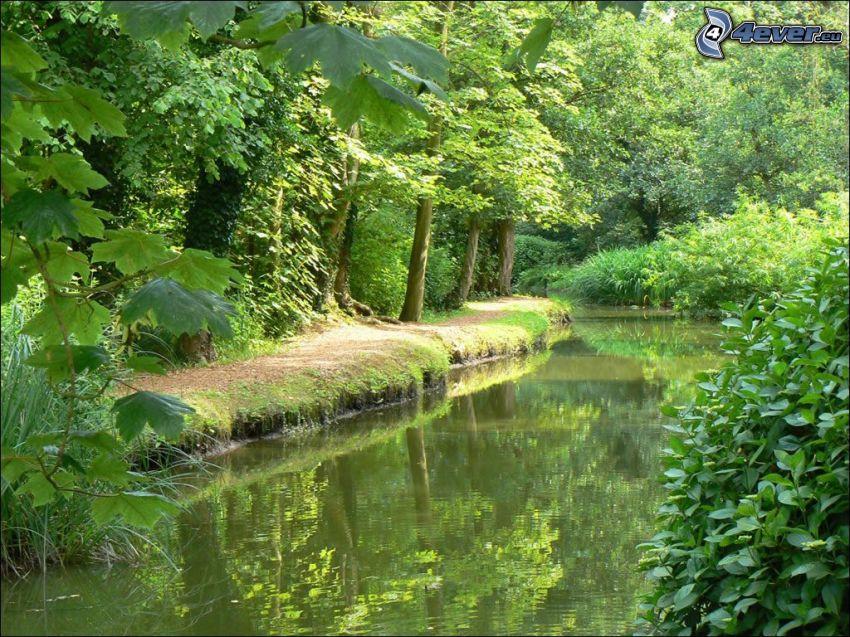 walkway along brook, forest, greenery