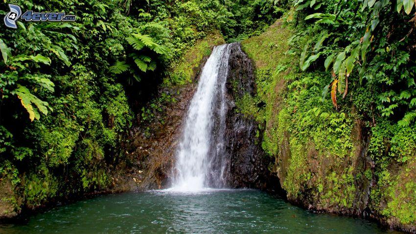 waterfall, greenery