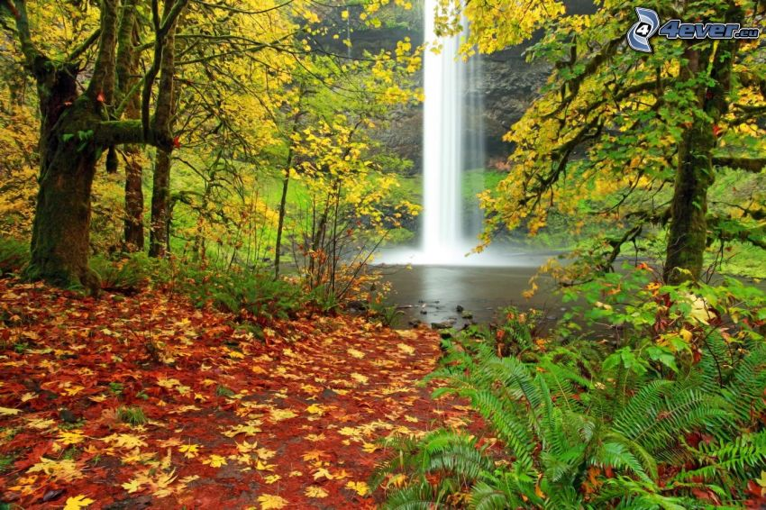 waterfall, lake in woods, autumn trees, fallen leaves