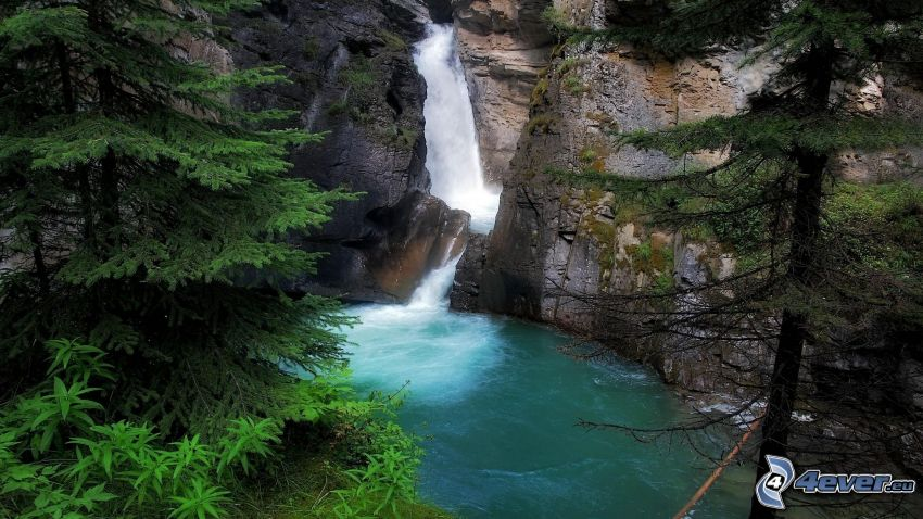 waterfall in the forest, rock, coniferous trees