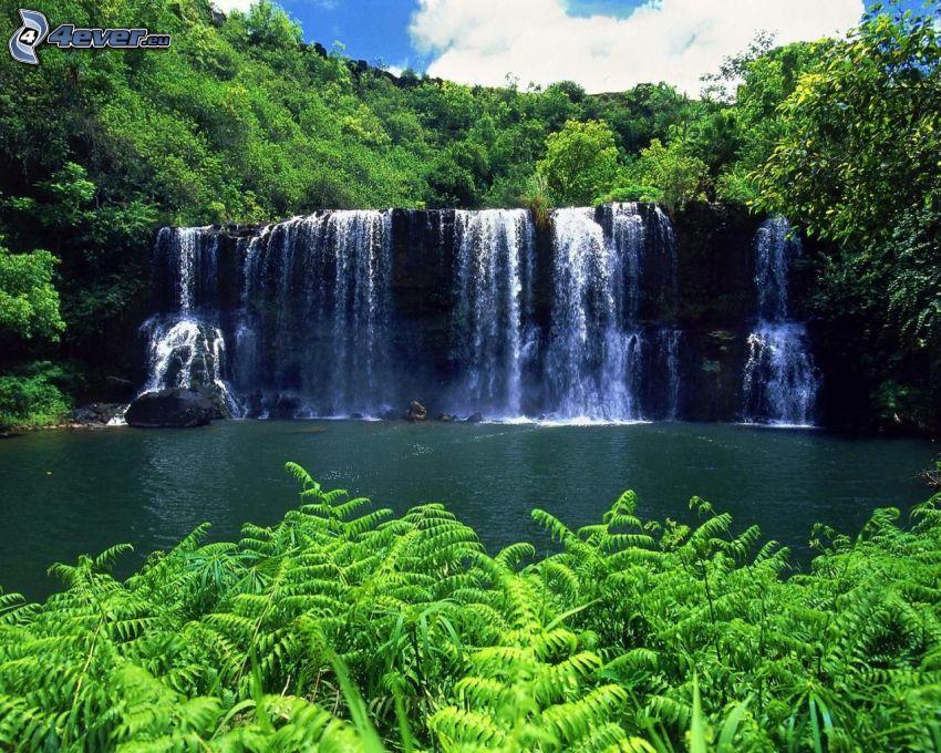 waterfall in the jungle, greenery
