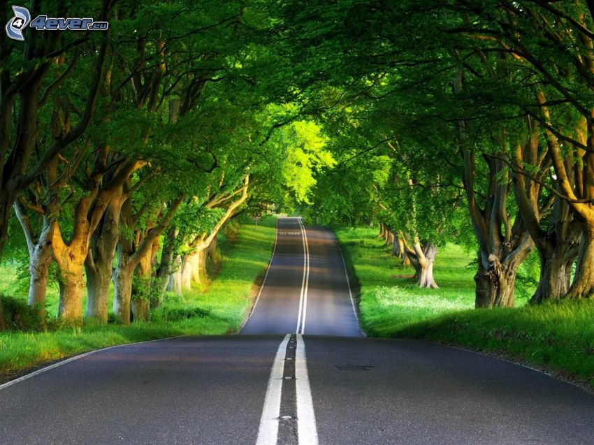 way through green alley, trees