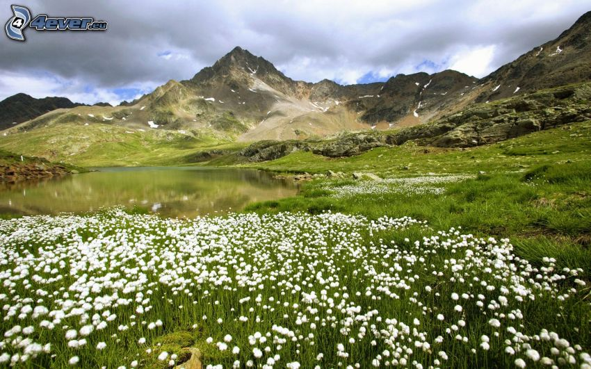 white flowers, lake, rocky hills