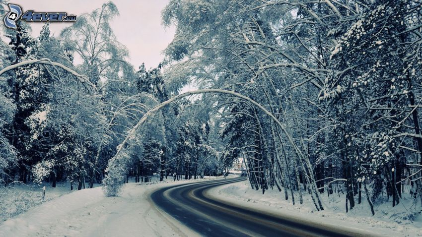 winter road, snowy trees, road curve