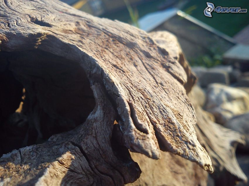 wood, stump