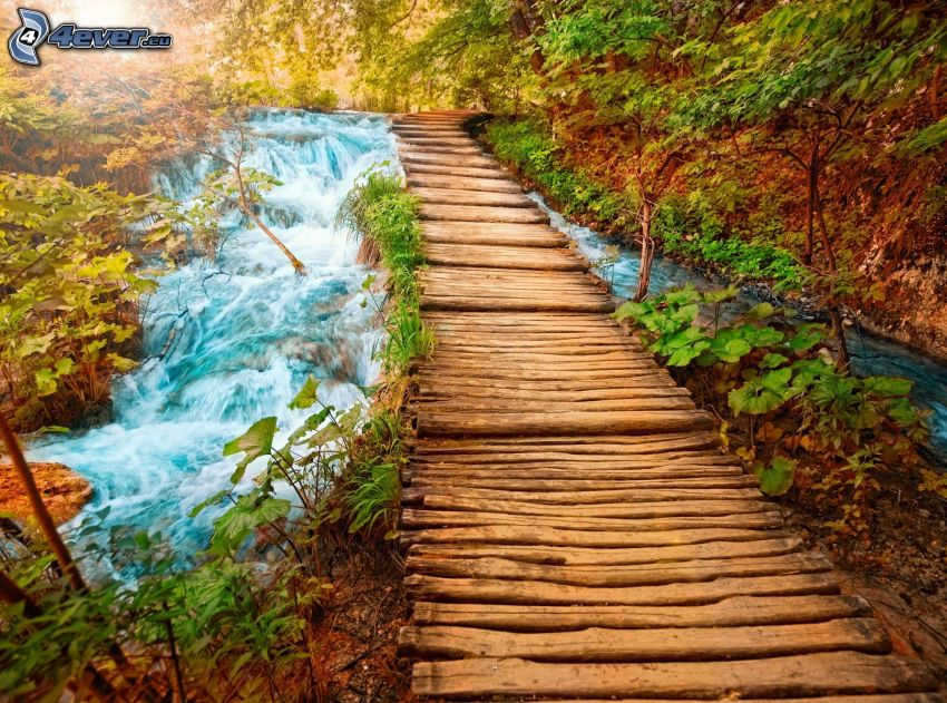 wooden bridge in a forest, forest creek, greenery